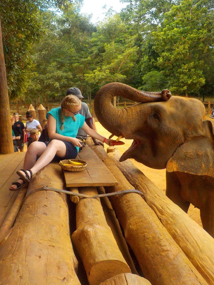 feeding elephants on a funded gap year